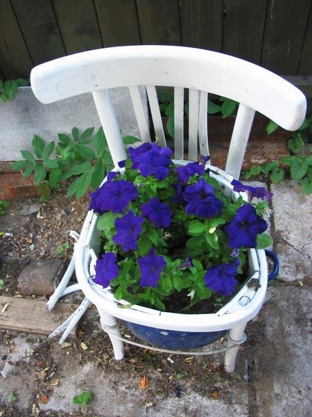 Белый стул с синей петунией