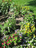 Клумба с бордюрными цветами
