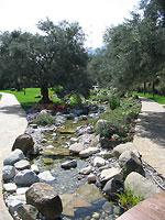 Ручей в оливковой роще