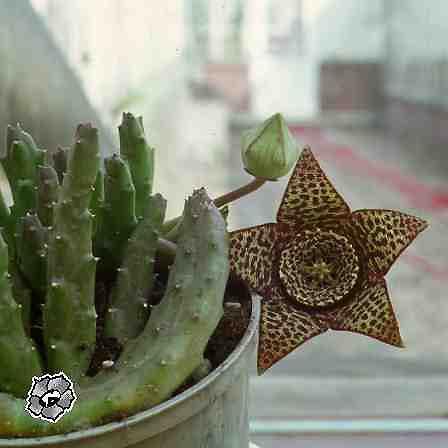 Цветочный магазин комнатные растения